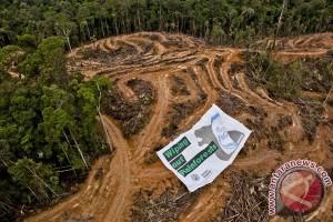Greenpeace Muara Teweh