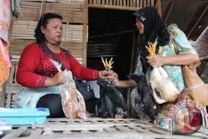 Harga Ayam Kampung