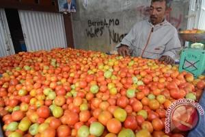 Harga Tomat Anjlok