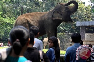 At least 100 thousand people expected to visit Ragunan Zoo
