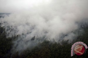 Penanganan kebakaran hutan-lahan di Riau dinilai lebih baik