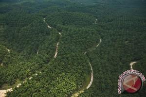 Petani Bengkulu ganti sawit dengan tanaman hutan