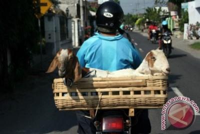 Ratusan pelajar Purwakarta telah memiliki hewan ternak program Budak Angon