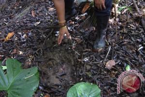 Jurnalis Kalimantan dituntut paham cara membaca data lingkungan