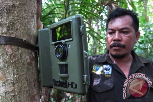 Penyebab badak jawa Ujung Kulon sulit bertambah