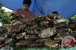 TNI AL gagalkan penyelundupan induk kepiting di Sebatik