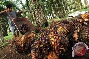 Potensi pengolahan limbah sawit Riau 1.000 MW