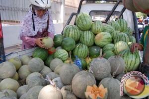 UGM kembangkan melon unggul Tacapa