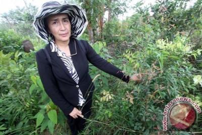 Inventarisasi Flora Endemik Batam