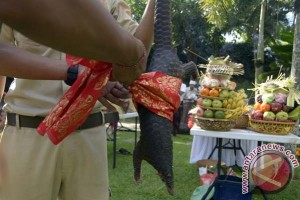 """Tumpek Kandang"" pada 30 April jadi pesona pariwisata Bali"
