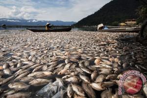Kabupaten Agam butuh Rp1,6 miliar bersihkan Danau Maninjau