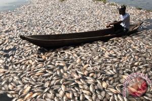 Peningkatan kadar CO2 air bahayakan kehidupan ikan