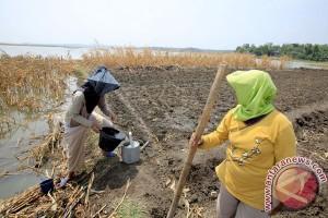 Pertanian Waduk Kedung Ombo