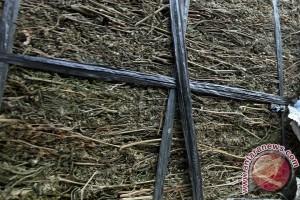 Polresta Padang amankan tiga kilogram ganja