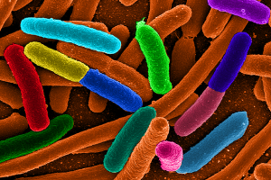 Ilmuwan gunakan E.coli untuk buat bahan bakar alternatif