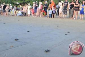 Pemuda Bali lepas tukik di Pantai Serangan