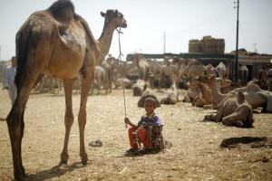 Harga unta melambung, pasar ternak Mesir lesu