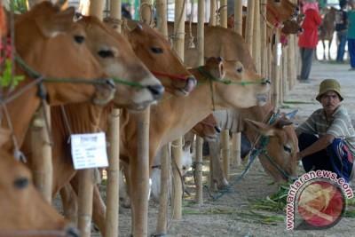 """Jakarta akan """"impor"""" daging sapi dari NTT"""
