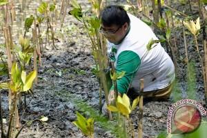 Mahasiswa UGM tanam ribuan mangrove di Pantai Trisik