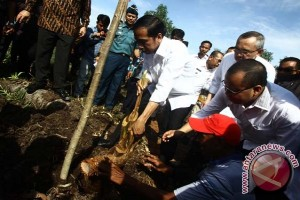 LIPI: tanaman sagu bantu restorasi lahan gambut