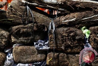 Tersangka pengedar 4,25 ton ganja terancam hukuman mati