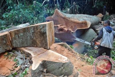 Antisipasi Pohon Tumbang KRB