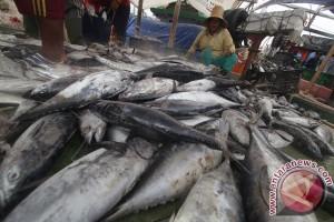 Salmon transgenik aman dimakan di Kanada