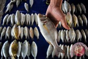 KKP gelar Bazar Ikan Murah Ramadhan