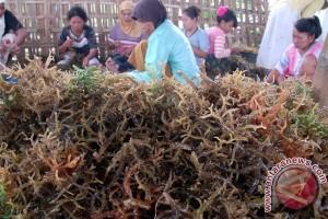 Hong Kong investasi rumput laut di Bitung