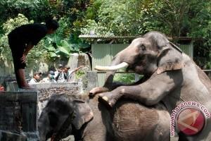 GL Zoo akan tanam ratusan pohon perindang