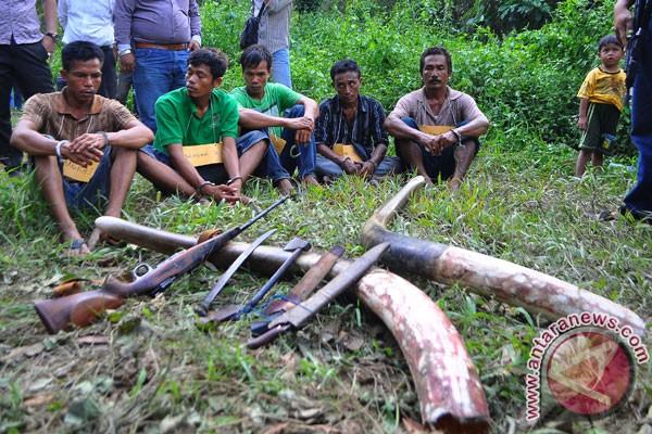Vonis rendah pembantai gajah sumatera preseden buruk