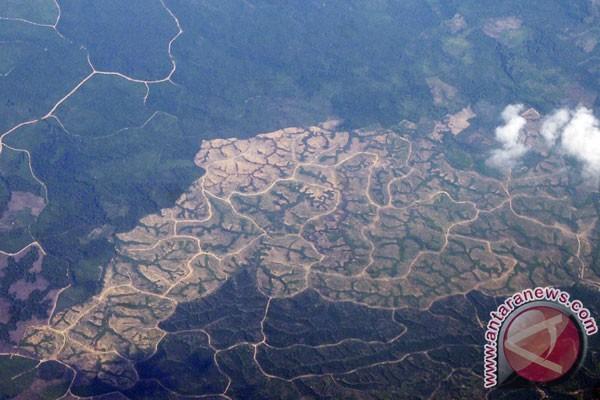 Pemerintah diminta evaluasi perizinan di kawasan hutan