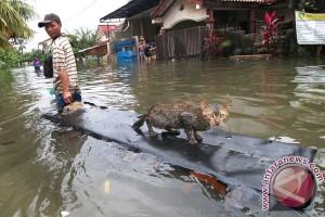 Pengungsi banjir Manokwari mencapai 1.000 jiwa