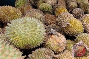Buah durian Mamuju banjiri Palu, dijual Rp5.000-Rp20.000