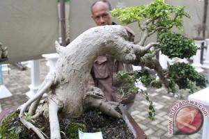 Transaksi pameran bonsai Situbondo capai ratusan juta rupiah