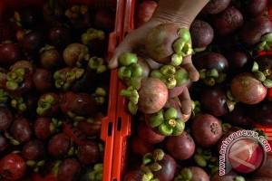 Manggis Lebak tembus pasar Jepang 600 ton