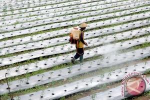 Legislator : penyuluh pertanian wajib turun ke lapangan