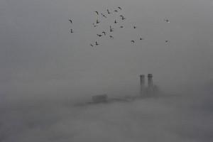 WHO: 92 persen penduduk dunia hirup udara berbahaya