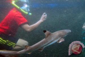 Menikmati Bangsring Under Water Banyuwangi