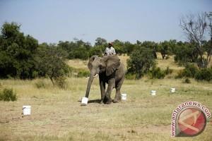 Kemarau ancam suaka alam terbesar di Tanzania