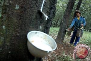 Gapkindo: harga karet turun resahkan petani