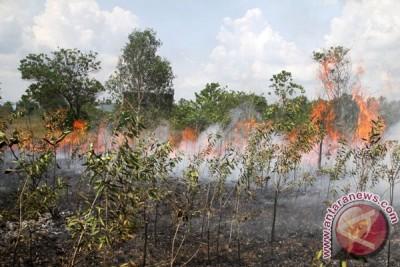 BMKG : musim kemarau potensi kebakaran hutan