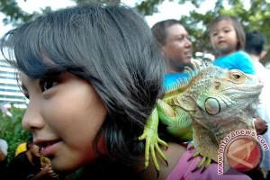 Sosialisasi Hewan Iguana