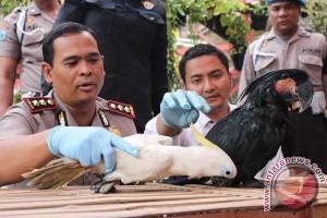 Polisi gagalkan penyelundupan kakatua jambul kuning