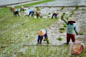 Pemprov Kalteng sediakan lahan pertanian organik terbesar