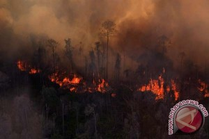 Kebakaran hutan terjadi di taman nasional Albania