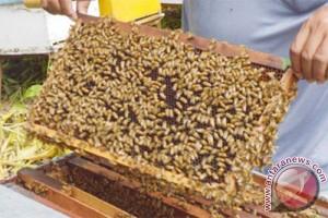 Perempuan Kenya perangi kemiskinan lewat produk lebah