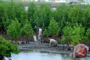 Aceh Barat tanam 23.500 pohon