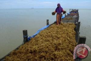 """Kemendag antisipasi aturan """"delisting"""" rumput laut Amerika"""