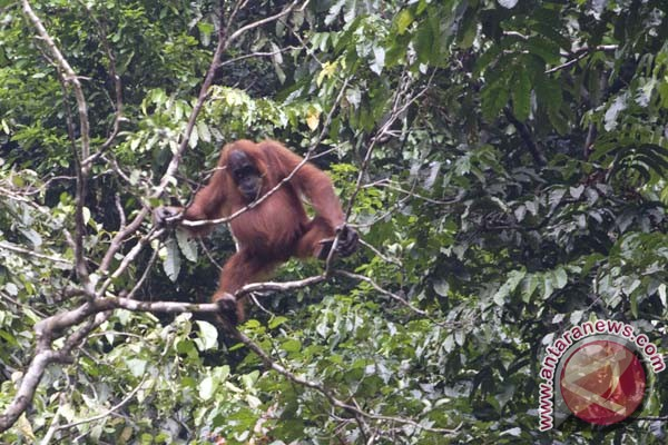 Indonesia promoting eco-tourism to protect rainforests